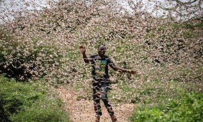 Clip: Choáng váng cảnh hàng triệu con châu chấu bay kín trời ở Saudi Arabia
