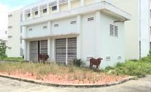 Cận cảnh 2 bệnh viện hàng trăm tỉ bỏ hoang ở Bình Dương