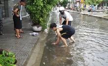 Người Đà Nẵng ra đường bắt cá sau trận mưa lớn suốt đêm