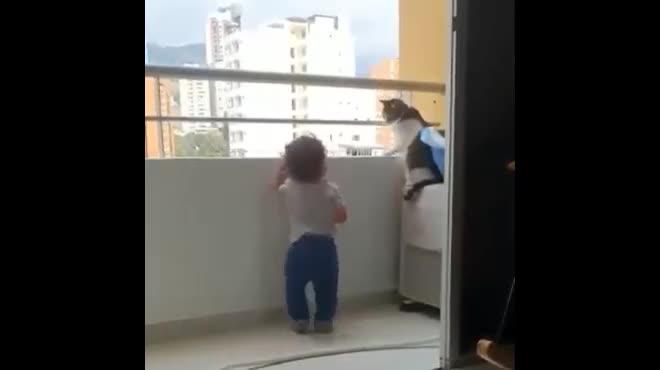 Con mèo thông minh liên tục ngăn cậu bé leo lên lan can