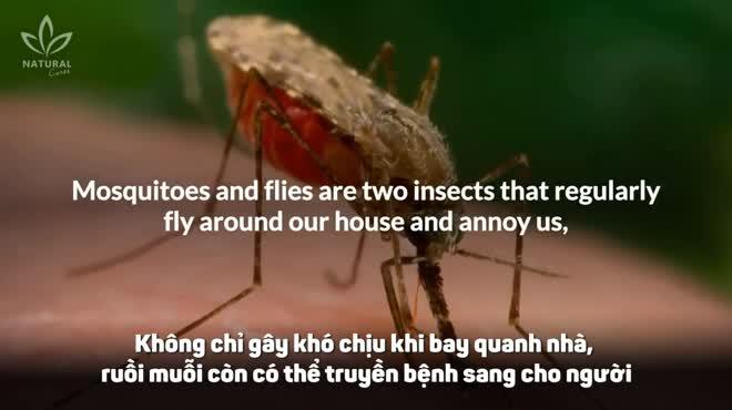 6 loại cây giúp xua đuổi ruồi muỗi vừa an toàn lại vô cùng hiệu quả