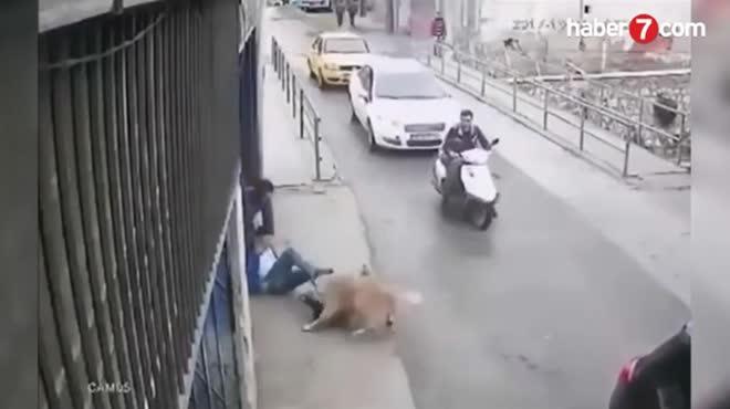 Pitbull bị chó Kangal tấn công, cắn xé kinh hoàng trên phố